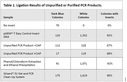 Ligation results of unpurified or purified PCR products